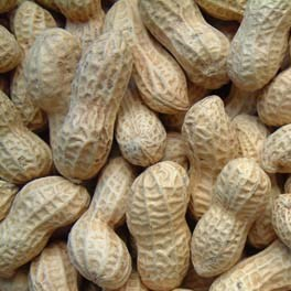 Nuts for Birds