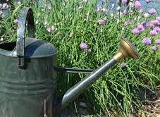 water your garden regularly